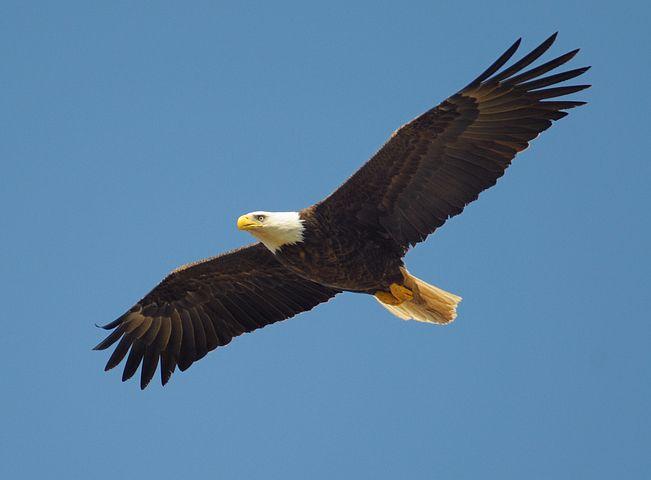 Was hat der Adler mit Forever living products zu tun?